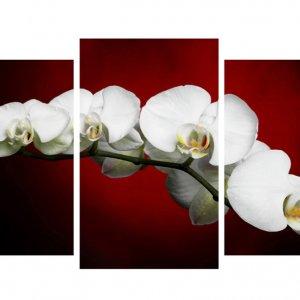 Модульная картина Декор Карпаты 100х53 см Орхидеи (M3-t22)