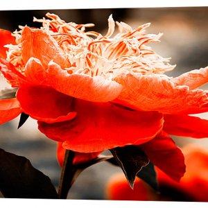 Картина на холсте Декор Карпаты Цветы 50х100 см (c443)