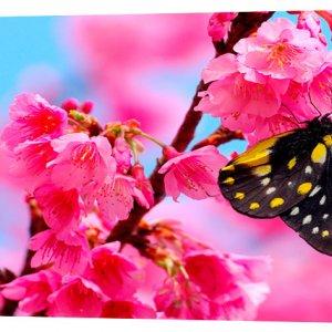 Картина на холсте Декор Карпаты Бабочка на цветке 50х100 см (c55)