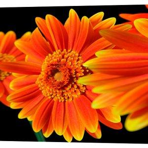 Картина на холсте Декор Карпаты Цветы 50х100 см (c10)