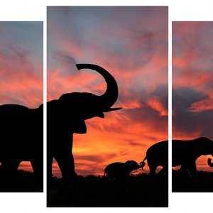 Модульная картина Декор Карпаты 100х53 см Слоны (M3-t196)