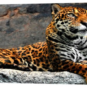 Картина на холсте Декор Карпаты Животные 50х100 см (z649)