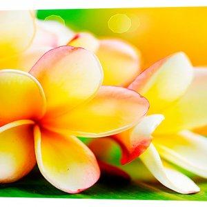 Картина на холсте Декор Карпаты Цветы 50х100 см (c209)