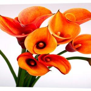 Картина на холсте Декор Карпаты Цветы 50х100 см (c104)