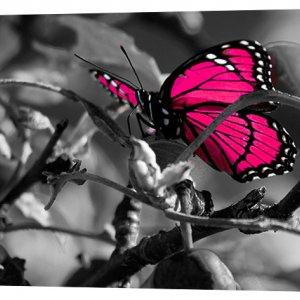Картина на холсте Декор Карпаты Яркая бабочка 50х100 см (p173)