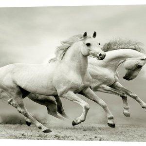 Картина на холсте Декор Карпаты Пара лошадей 50х100 см (z17)
