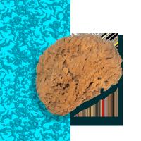 Морская натуральная губка
