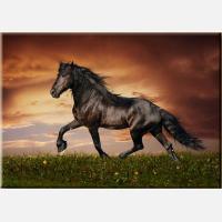 """Картина на холсте """"Черный конь"""""""
