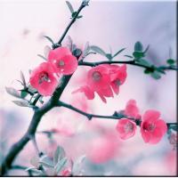"Картина на холсте ""Весна"""